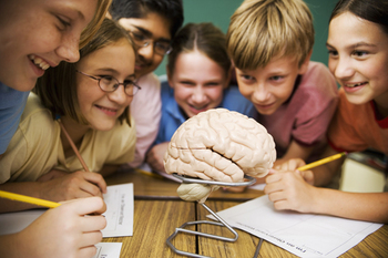 Students Studying Human Brain in Science Class